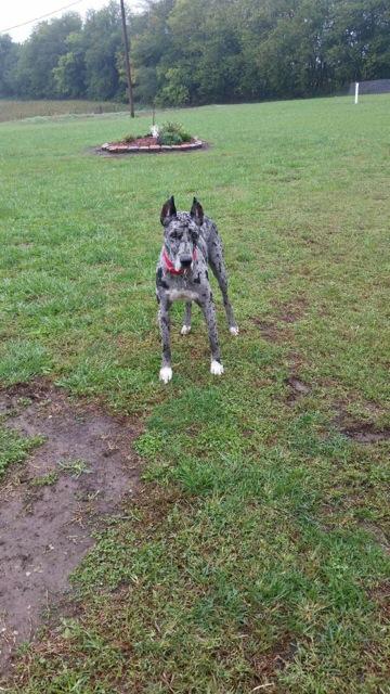 Loui - Adopted Feb 2019