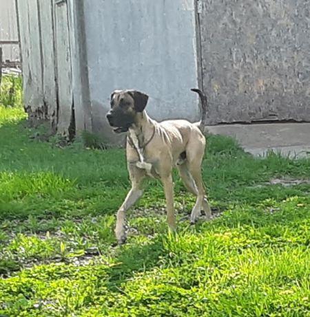 Wyatt-adopted April 2019