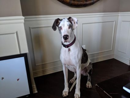 Betty-four-year-old harl 2