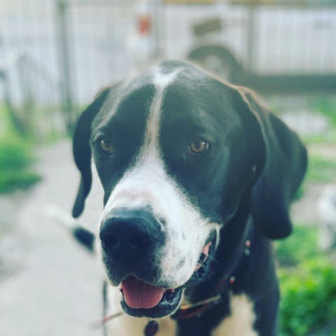 Scout -1 yr old Mantle male 3