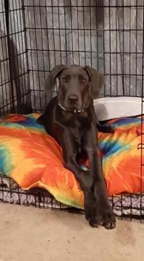 Josie 6 months adopted june 2020