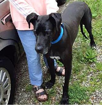 Lila-adopted may 2020