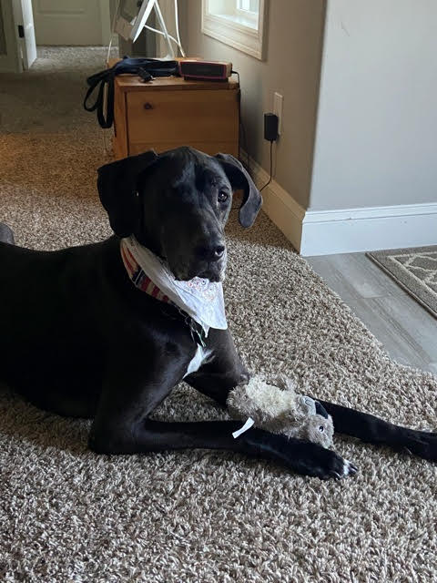 Haley -six-years-old- adopted Nov 2020